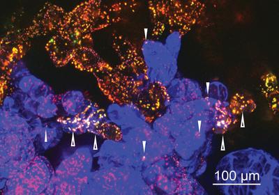 Plant Cells Swap Organelles