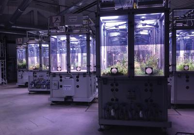 Invertebrate Density Influences Plant Flowering Times, Abundance