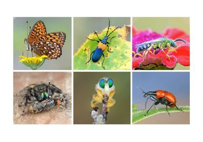 """Q&A: Global Insect Declines Due to """"Death by a Thousand Cuts"""""""