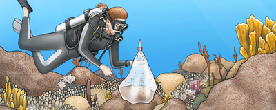 Infographic: How to Accelerate the Growth of Restored Corals