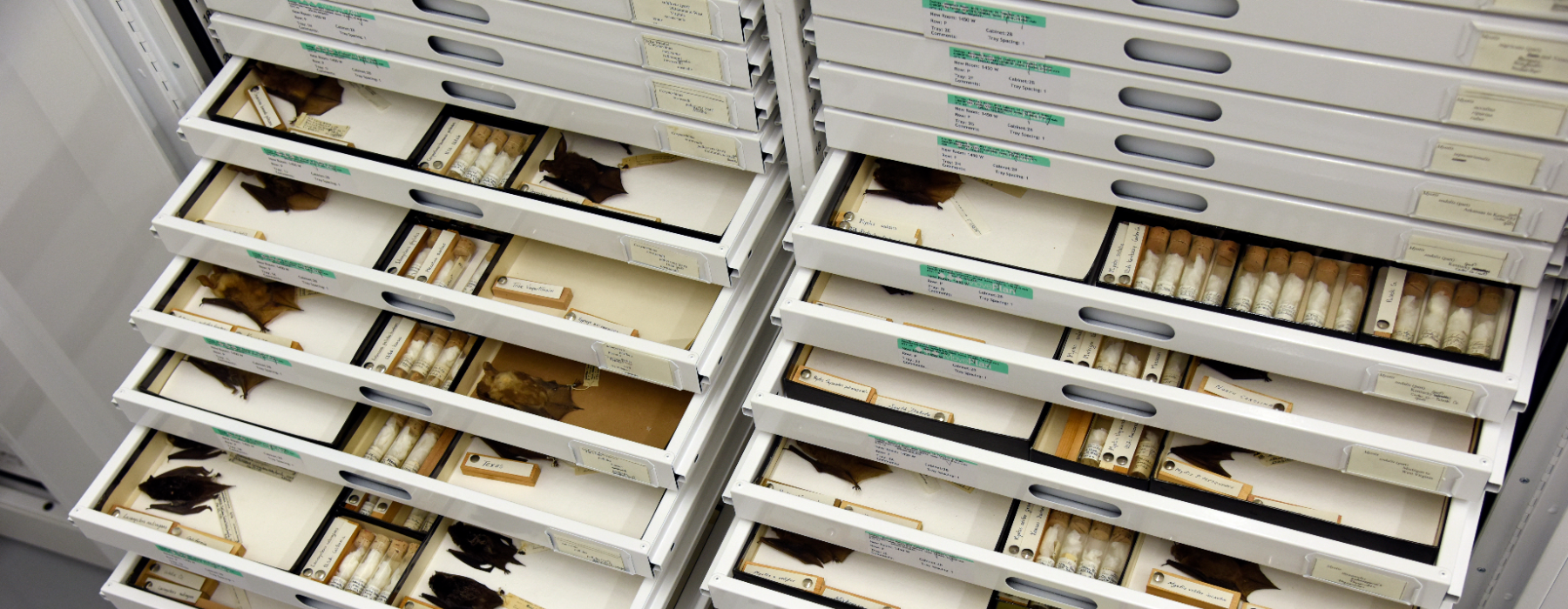 Q&A: Natural History Museums' Role in Pandemic Surveillance