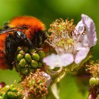 过去一个世纪的蜜蜂报告表明了多样性的丧失
