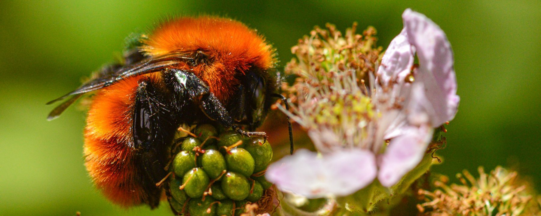 Bee Reports over the Past Century Indicate a Loss of Diversity