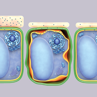 Infographic: A Plant Cell's Cuticle Helps Regulate Toxic Chemical Accumulation