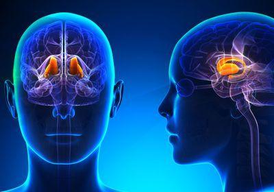 Brain Stimulation Tested to Awaken Coma Patients