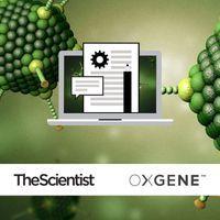 Optimizing Adeno-Associated Virus (AAV) Manufacturing