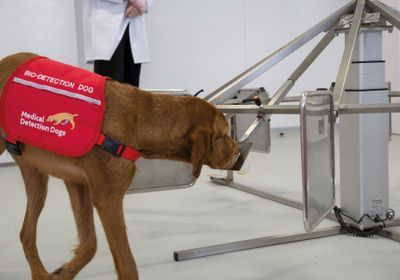 Dogs Are Teaching Machines to Sniff Out Cancer