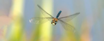 Free Fallin': How Scientists Study Unrestrained Insects