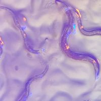 Eyeless <em>C. elegans</em> Perceives Colors: Study