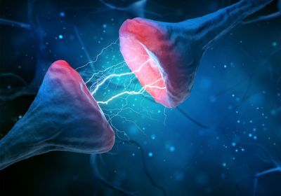 Flexible Synapse Strength May Underpin Mammal Brain's Complexity