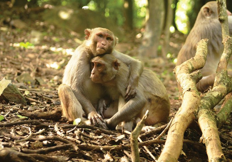 What a Video Game Can Reveal About Monkeys' Minds