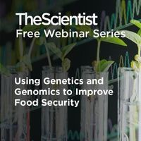 Using Genetics and Genomics to Improve Food Security