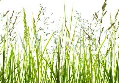 New Models Improve Long-Term Grass Pollen Forecasts