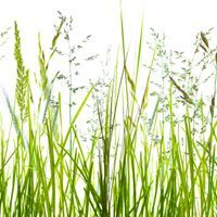 New Models Improve Long-Term Grass Pollen Forecasts