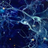 Early Training Forestalls Motor, Memory Difficulties in Mouse Model of Rett Syndrome