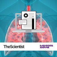 用类器官建模人类肺