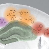 Anesthesia Impairs Memory in Mice