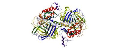 """Robert """"Buzz"""" Baldwin, Early Expert in Protein Structures, Dies"""