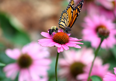 US Pesticide Use Is Down, but Damage to Pollinators Is Rising