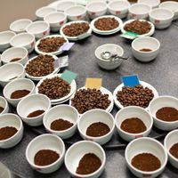 Rediscovered Coffee Species Tastes Great, Tolerates Warmth: Study