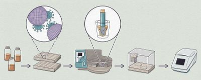 Infographic: How to Ferret Out SARS-CoV-2 in Sewage