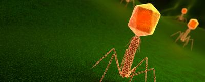 Some Viruses Use an Alternative Genetic Alphabet