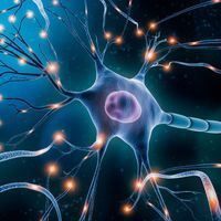 Discovering the Secrets of Motor Neurons with Single Cell Sequencing