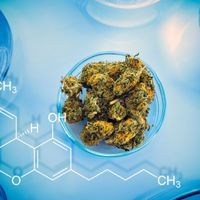 DEA Moves Toward Approving More Research Marijuana Growers