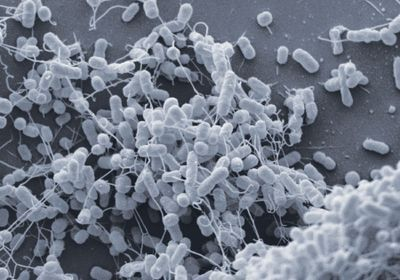 What's the Deal with Bacterial Nanotubes?