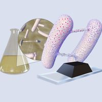 Infographic: Sources of Variation in Bacterial Nanotube Studies