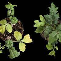 Stress-Response Compound Widespread in Animals Is Found in Plants