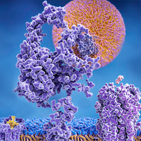 Measuring Membrane Proteins with Mass-Sensitive Particle Tracking