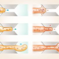 Infographic: How Fungi Squeeze Through Tight Spaces—or Don't