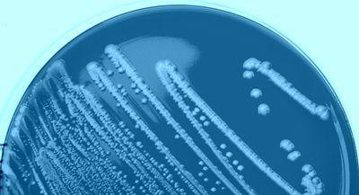 许多细菌和古代促销者向前和向后工作