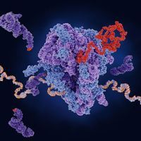 Using Automated 2D Electrophoresis for Protein Separation and Detecting Host Cell Proteins