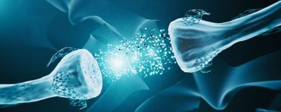Hippocampal Cell Communication Is Bidirectional: Study