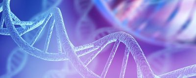 Nearly Complete Human Genome Sequenced
