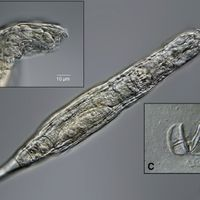 Rotifers Bounce Back After Being Frozen for 24,000 Years