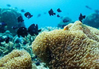First Immortal Cell Line Cultured for Reef-Building Corals