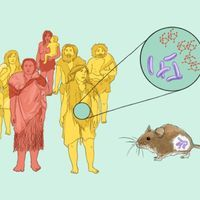 Infographic: Microbiome-Driven Adaptations in Animals