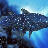 African Coelacanths May Live to Be 100: Study