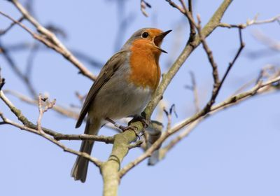 New Study Fuels Debate About Source of Birds' Magnetic Sense