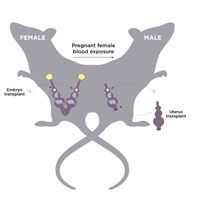 Study that Impregnated Male Rats Stirs Controversy