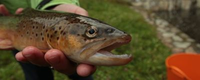 Trout Appear to Get Hooked on Meth