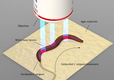 AI Controls Laser-Guided Robot Worms