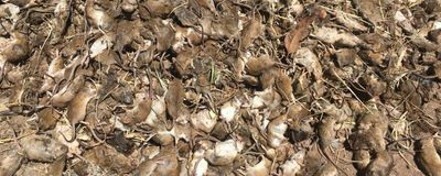 Mice Plague Eastern Australia in Record Numbers