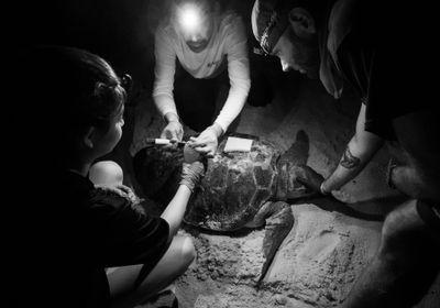 小搭便车者揭示海龟运动与觅食生态学