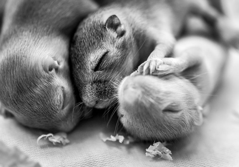 Retinal Activity Prepares Blind Newborn Mice for Vision