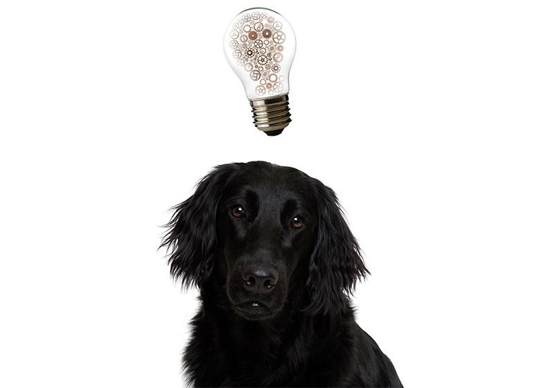 Into the Mind of Human's Best Friend: Using fMRI to Study Canine Cognition