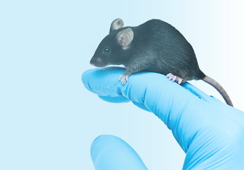 Technique Talk: Redefining Mouse Transgenesis with CRISPR-Cas Technology